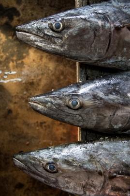Market Fish, Hoi An